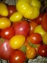 Home garden tomatoes