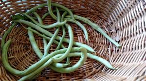Oh look, bean season has started!