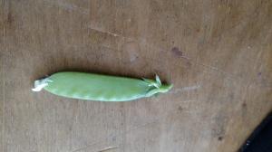 Snot peas
